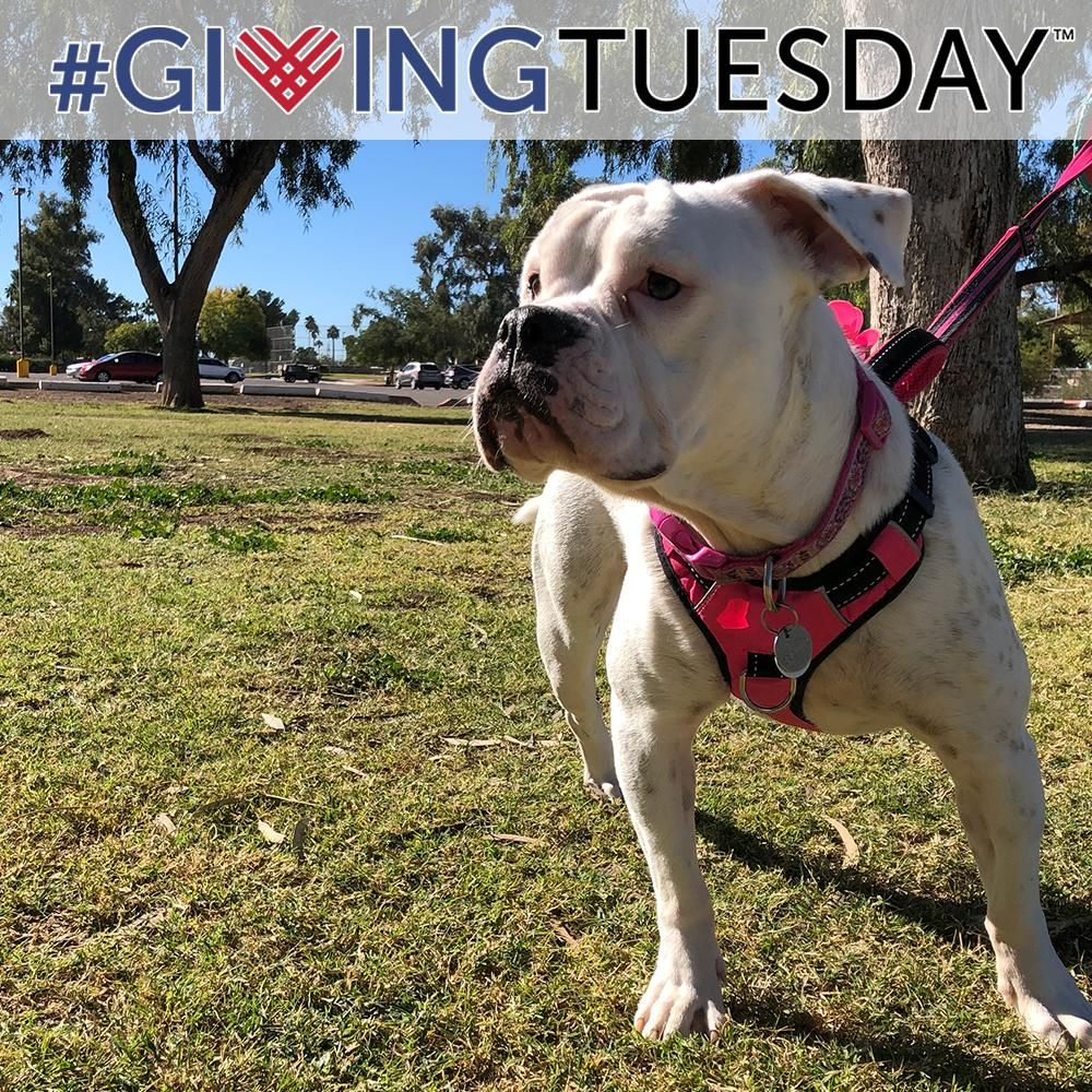 Giving Tuesday Send Food to Homeless Pets (for 2.00