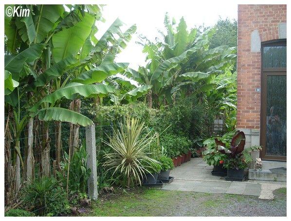 Visite d\'un jardin privé.   jardin exotique   Pinterest   Jardin ...