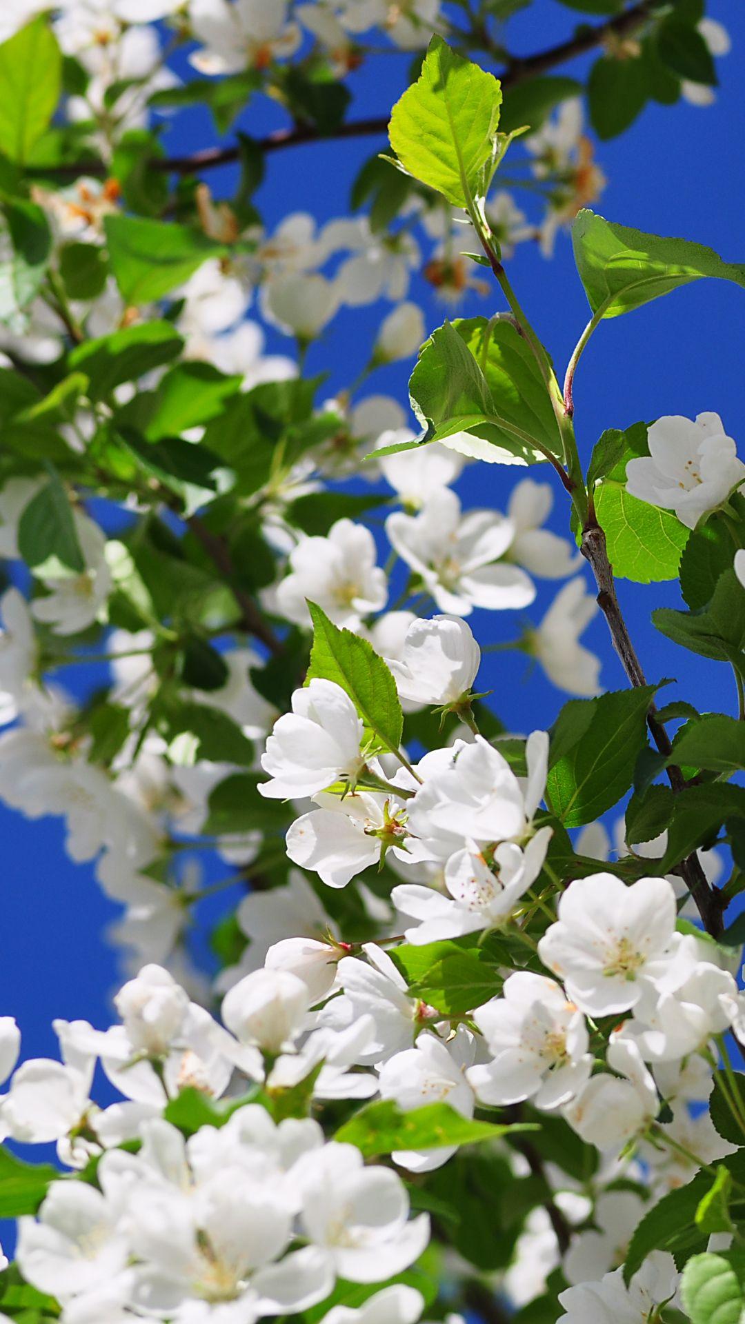Hd wallpaper flowers pinterest flowers wallpaper and
