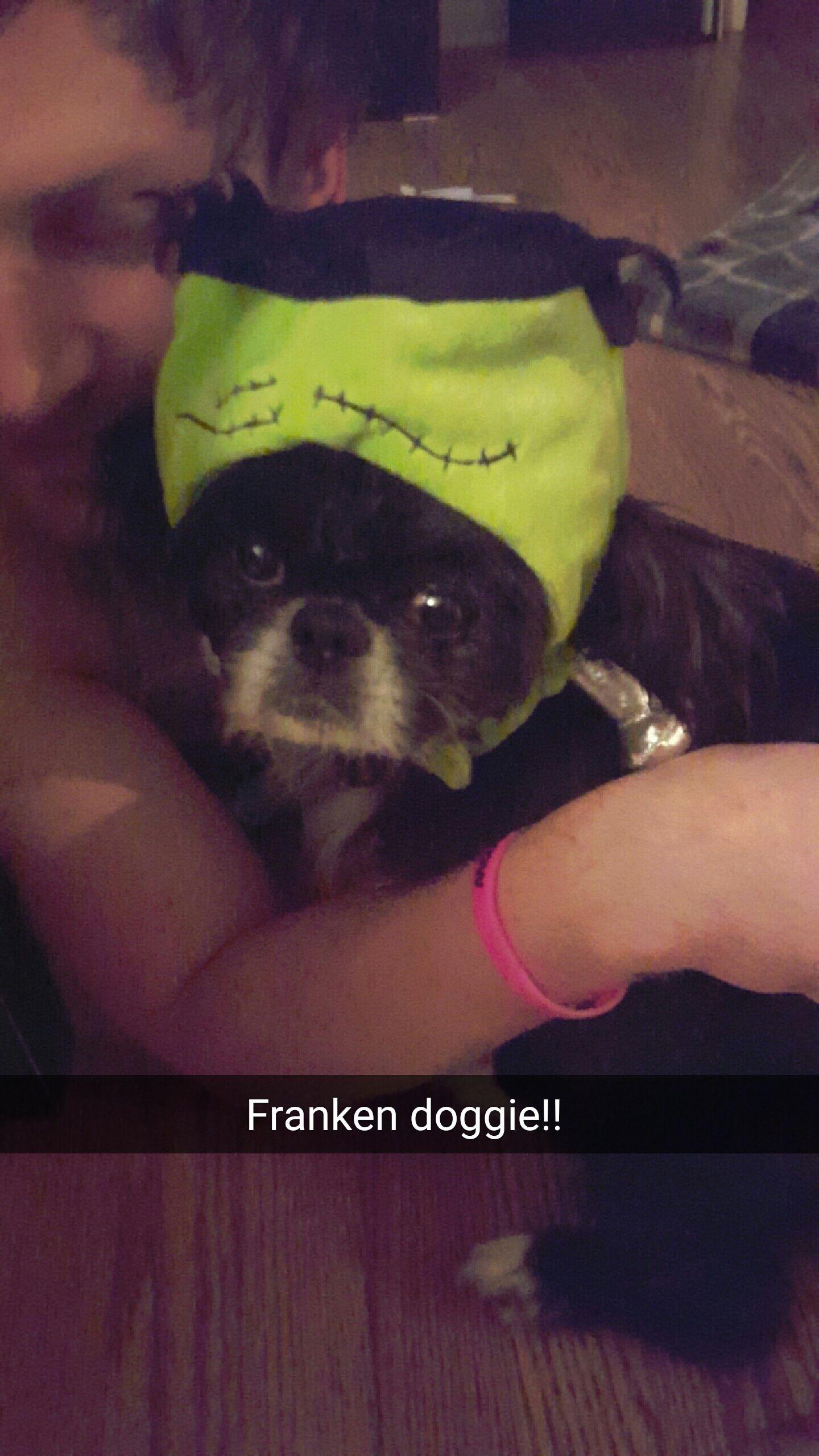 Frankendoggie! http://ift.tt/2epN5mY
