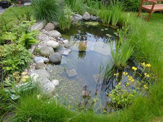 Pin on garden ponds waterfalls for Garden duck pond design