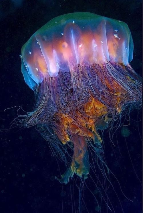 opticallyaroused:  Jelly