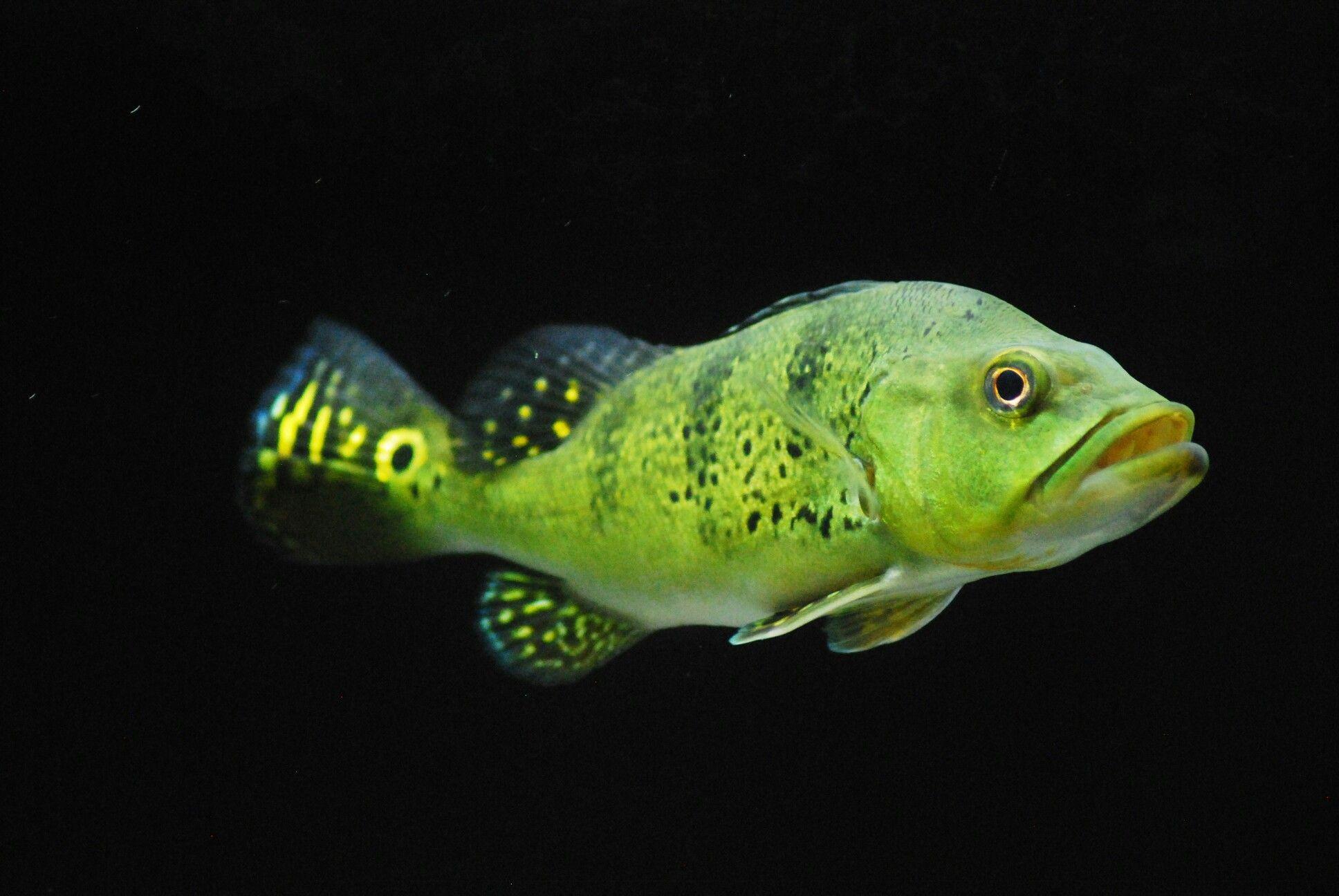 8145f55b999fdb56cdb49e68367f0f49 Frais De Aquarium Amazonien Concept