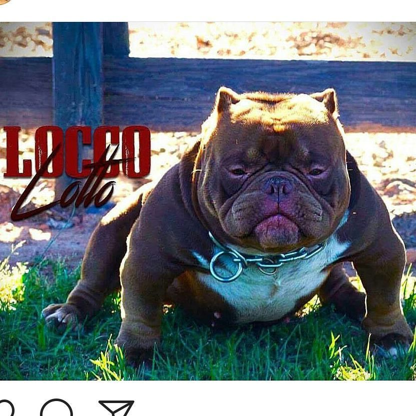 Locco Lotto Breeding Going Down In Atl In The Morning With Hazel