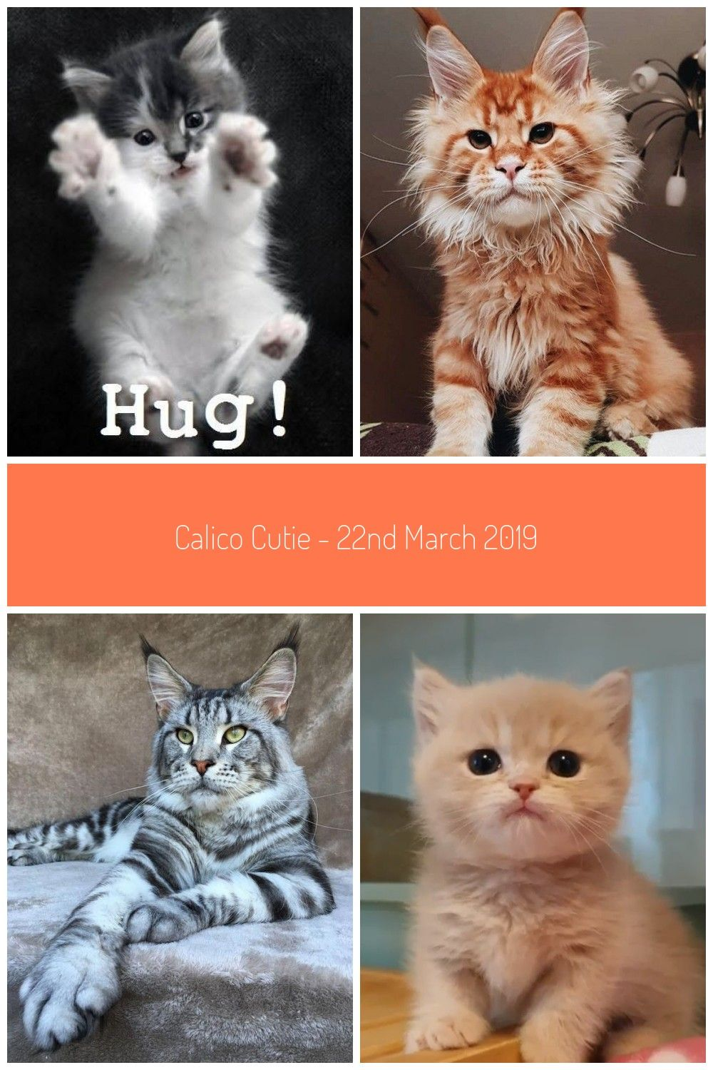 Yes Please Hugs Cats Kittens Cuteanimals Kitty Cats And Kittens Calico Cutie 22nd March 2019 We Love Cats And Kittens In 2020 Cats And Kittens
