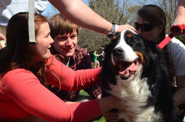 Duke Professor Offering Free Online Course On Dog Psychology Dog