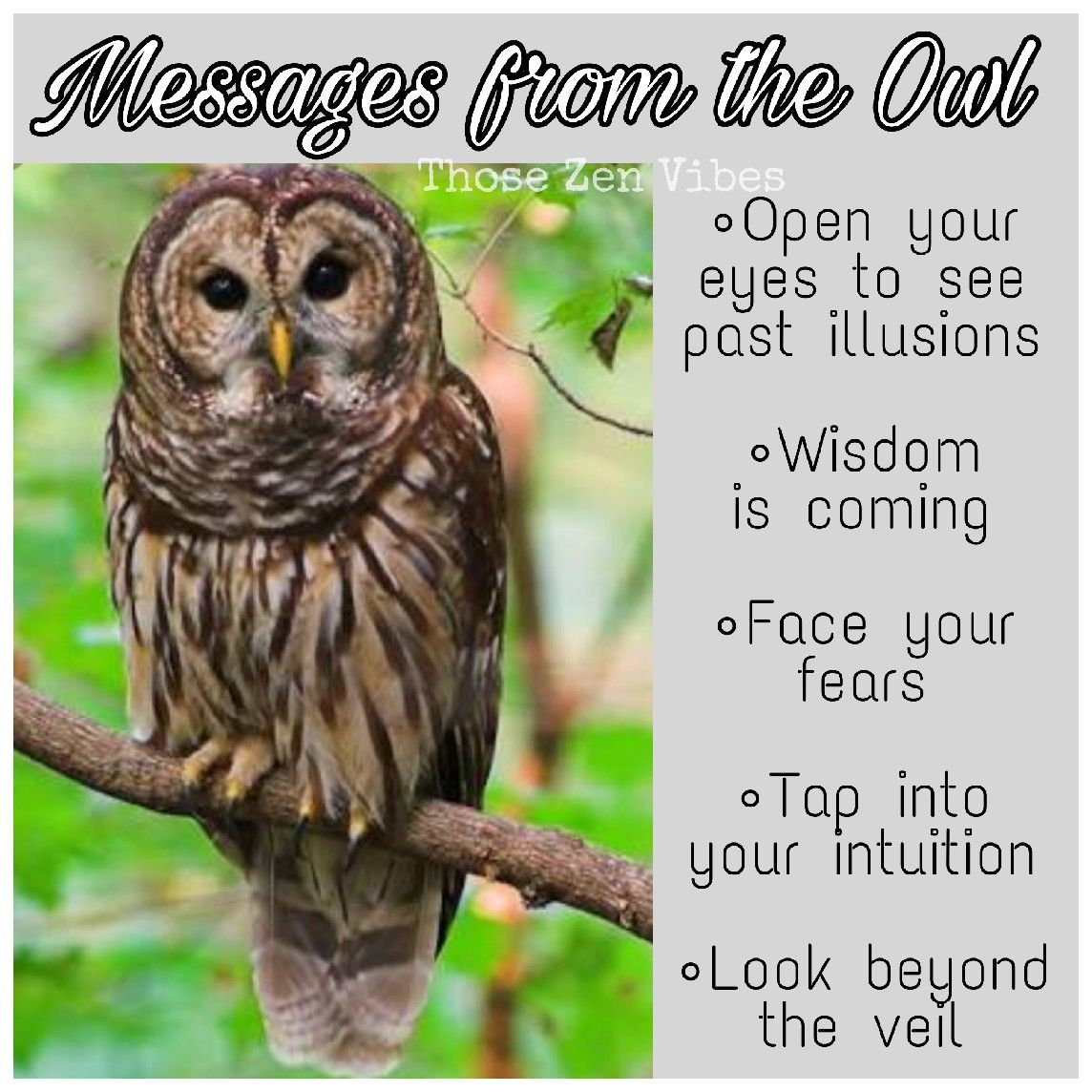Spirit animal owl meaning seeing past illusions wisdom is owl biocorpaavc