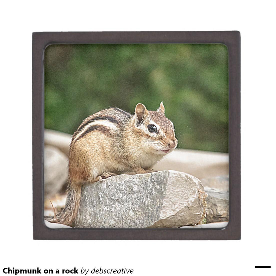 Chipmunk on a rock premium keepsake box