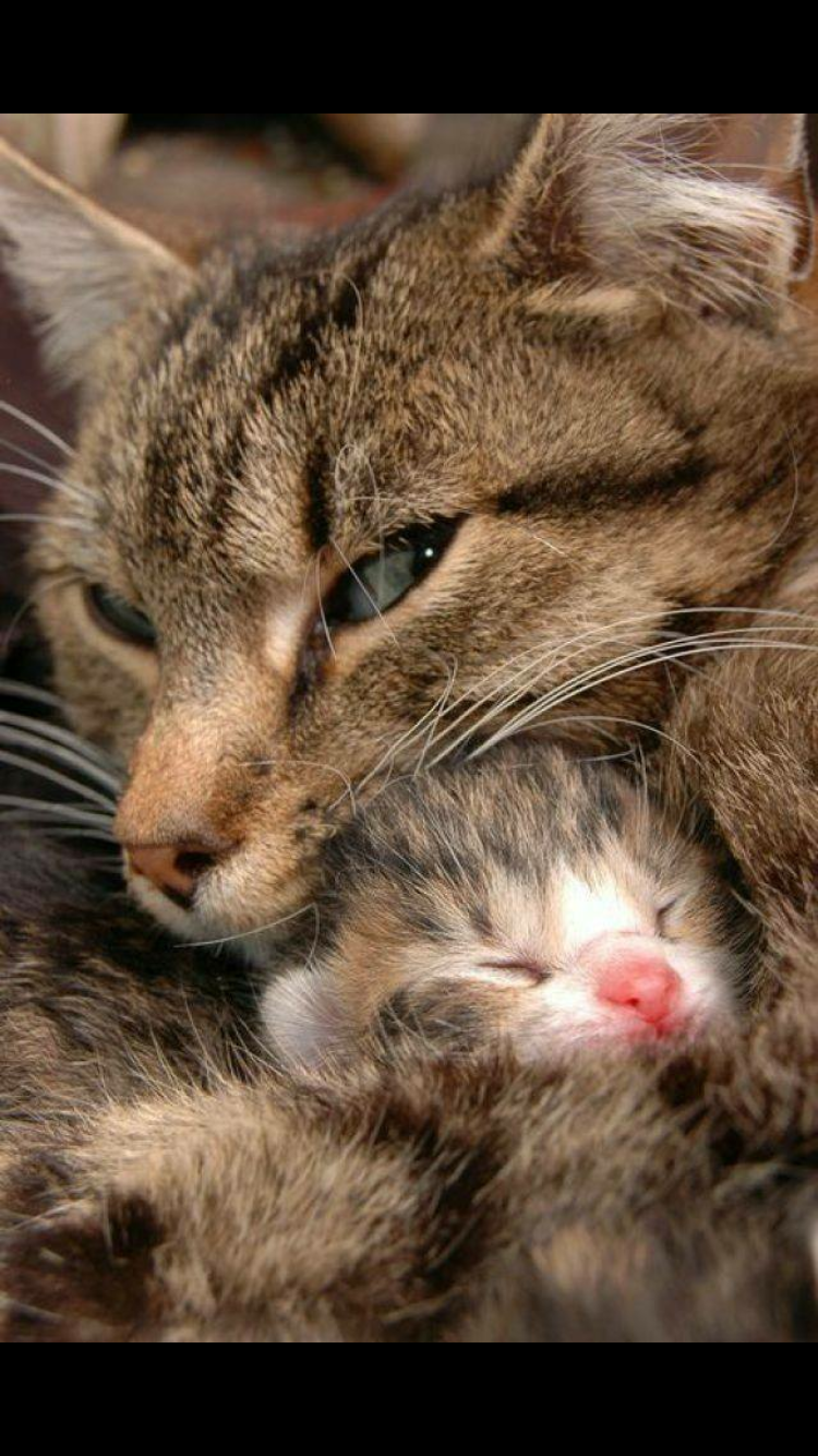 So Cute Cute Cats Cats Kittens