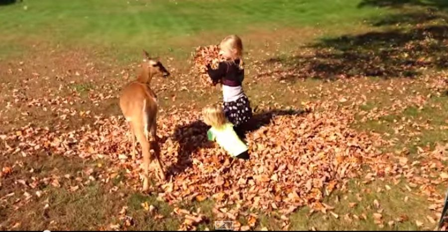 Little Girls and Fawn Have Some Autumn Fun [VIDEO] Fall