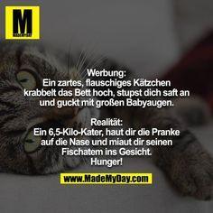 Werbung vs. Realität  #katzengeburtstag