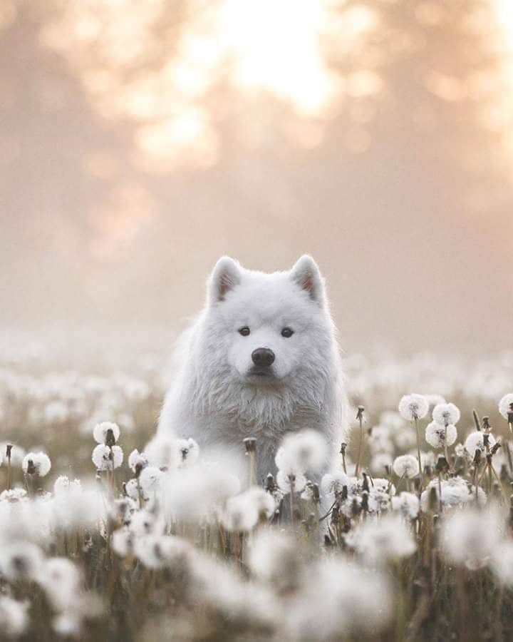 Perfect Shot Dog Pictures Animals Dogs