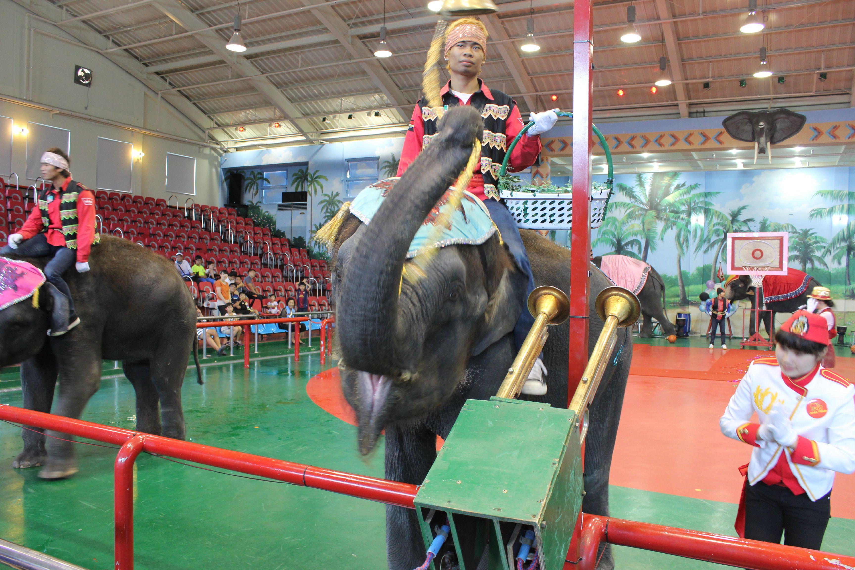 코끼리공연장-점보빌리지