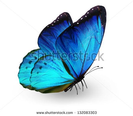 butterfly pictures side view google search tattoos