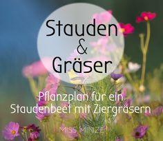 Einen Gräser Garten Anlegen, Der Stauden Und Gräser Optimal Kombiniert.  Mein Pflanzplan Für Trockene
