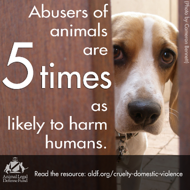 understanding the causes of animal cruelty Beyond the need to recognize and put an end to animal cruelty for the sake of the animal  causes physical harm  understanding the link between animal abuse.