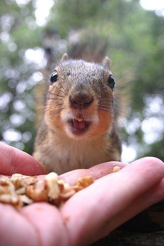 Pin By Megan Herbert On Squirrels Squirrel Pictures Cute Squirrel Animals