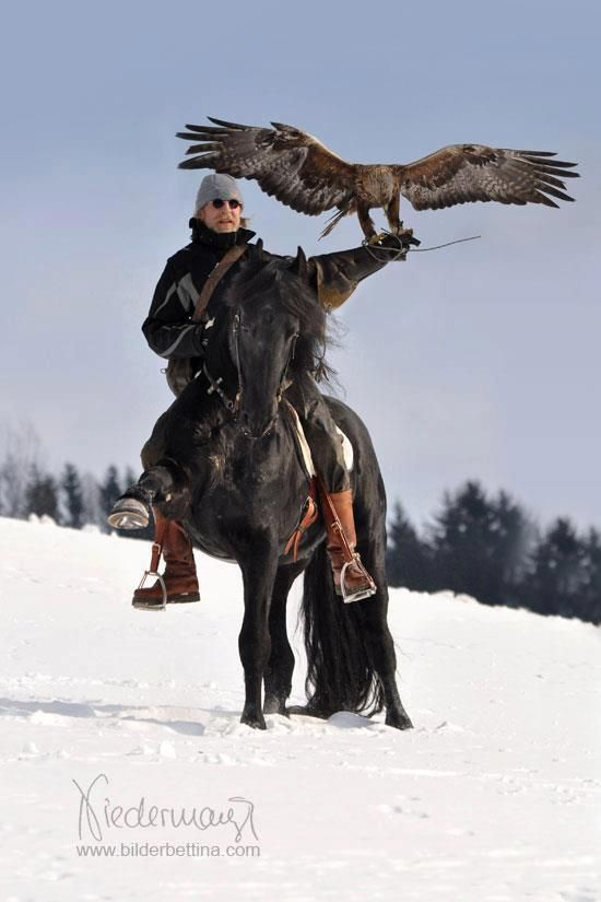 """Bad ass!! Falconry on horseback. Living the dream!!!"" 