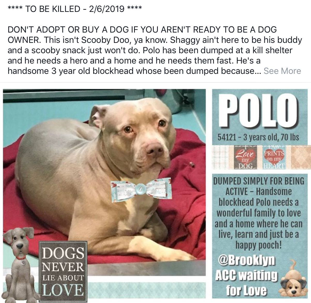 POLO PULLED BY POUND HOUNDS RESCUE❤️❤️02/07/19 ~ TO DIE