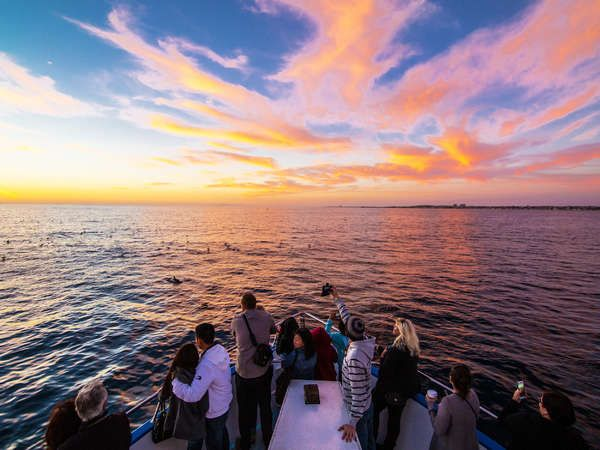 Sunset Cruise And Drinks In Newport Beach