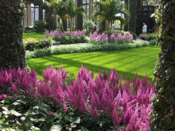 Tipos-de-plantas-para-jardim-externo plantas para jardim externo