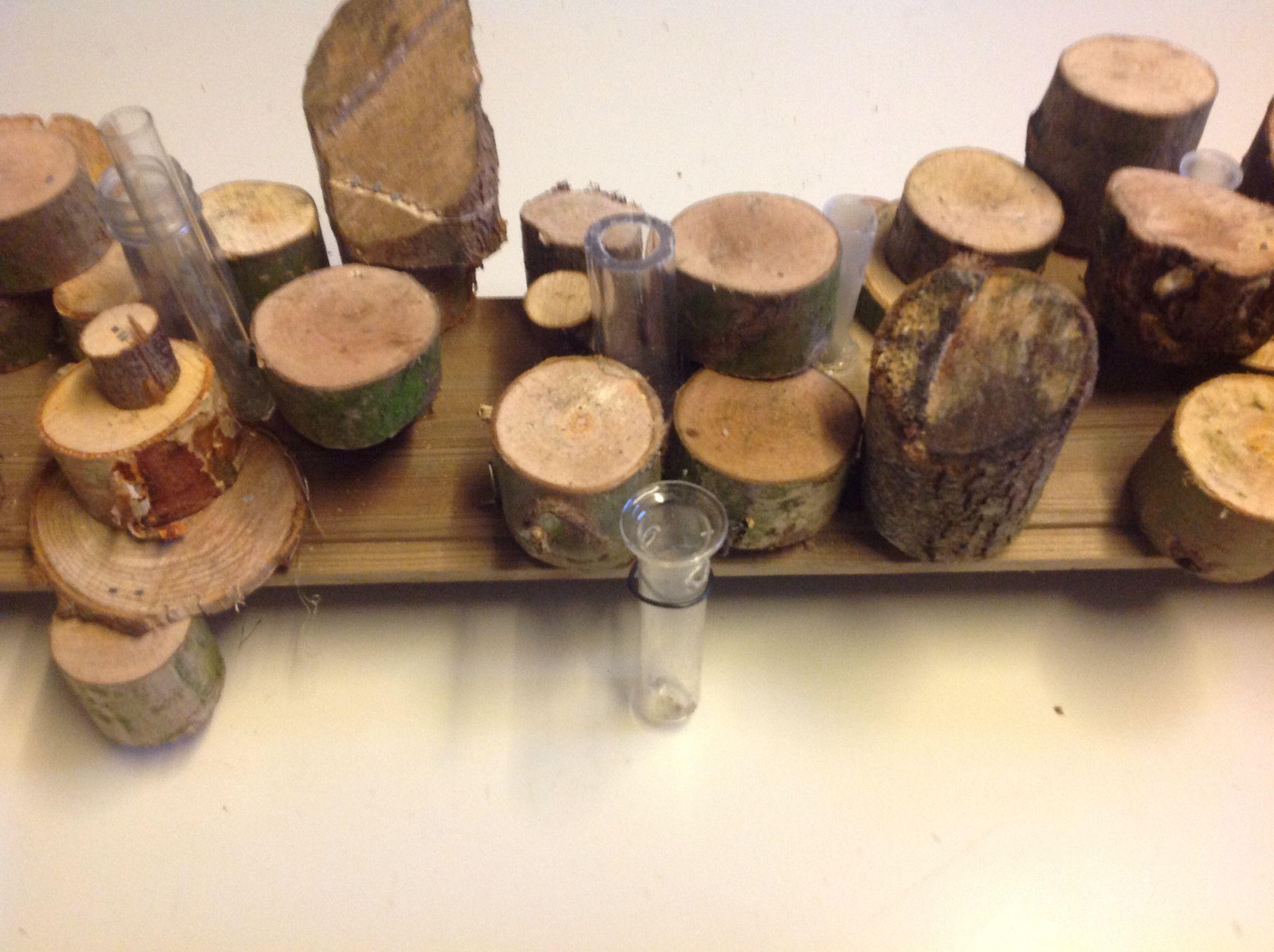 houtschijfjes op plank nieten basis voor bloemwerk des. Black Bedroom Furniture Sets. Home Design Ideas