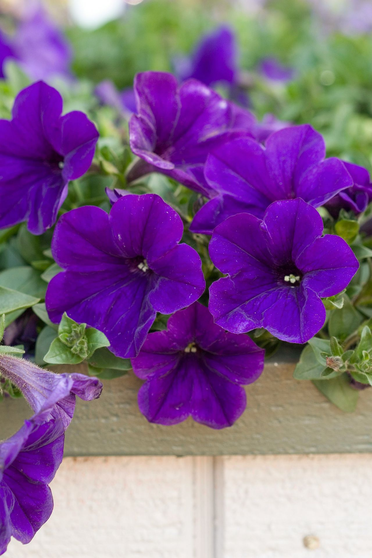 13 Of The Easiest Plants To Grow Outside In 2020 With Images