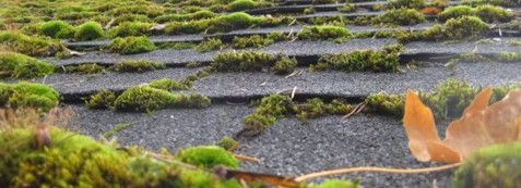 How To Remove Moss On Roofs Vinegar Mixture Recipe Back Gardens Moss Removal Garden