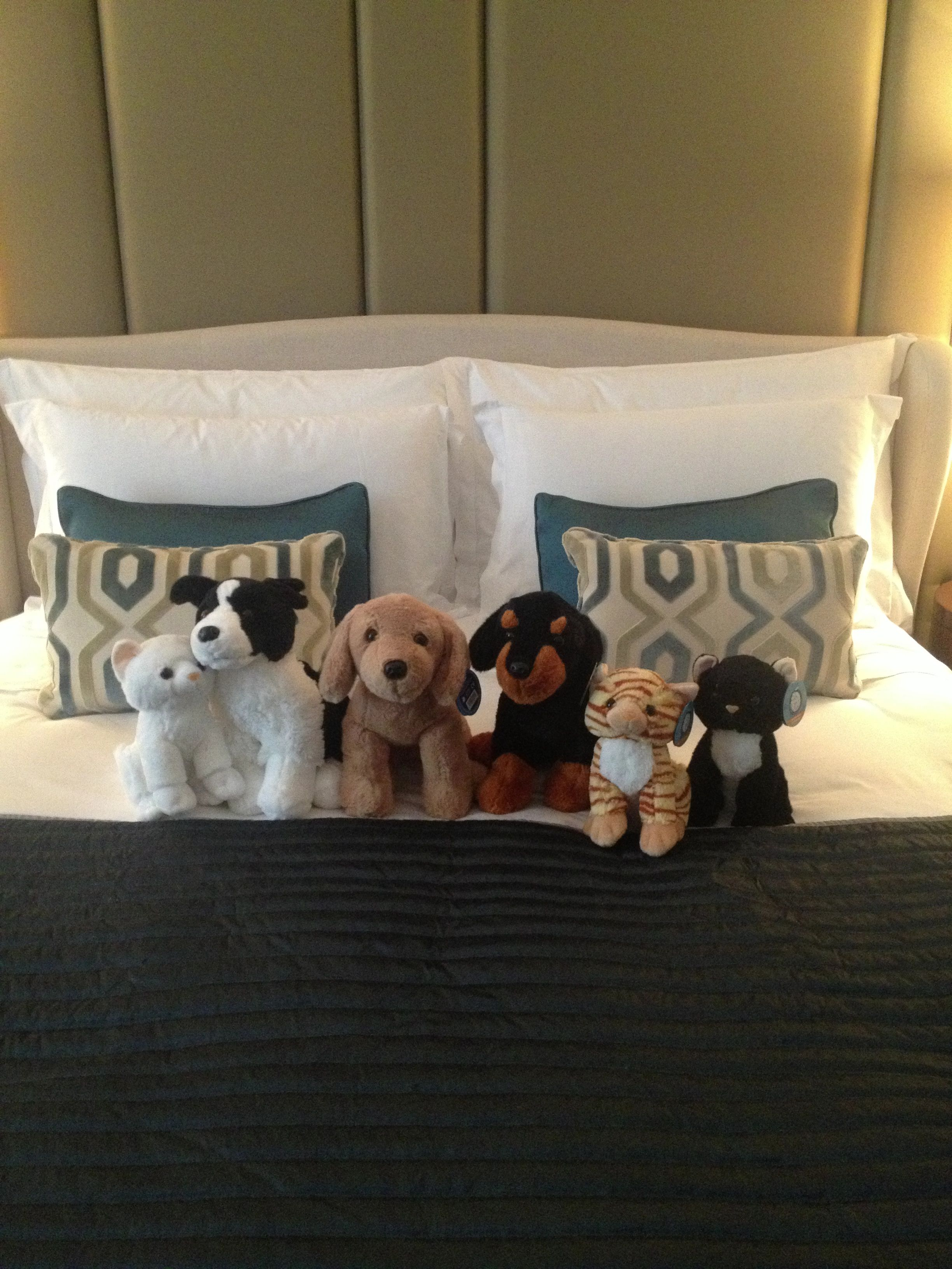 Battersea Dogs Cats Home Stuffed Toys Supporting Charity And Comforts Your Little Ones And Take Home And Ke Kid Friendly Hotels London Hotels London Kids