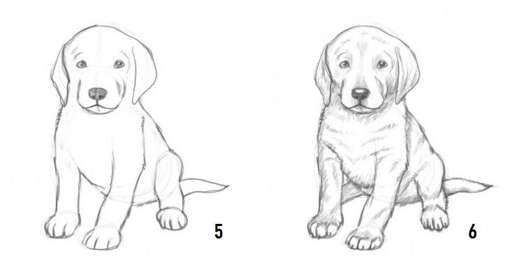 Impara A Disegnare Come Disegnare Un Cane Passaggi Per Disegno Di Cane Disegni A Matita Facili Disegni A Matita Disegni