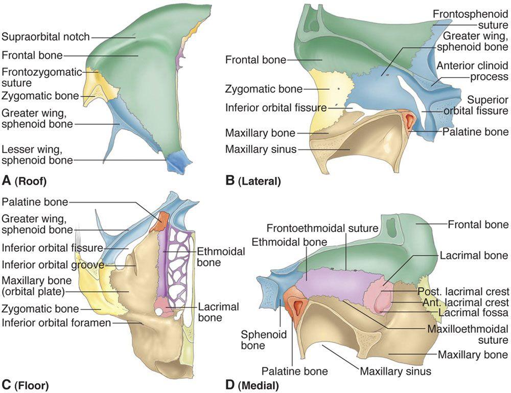 Pin By Umerzn On Anat Anatomy Neuro Eye Anatomy