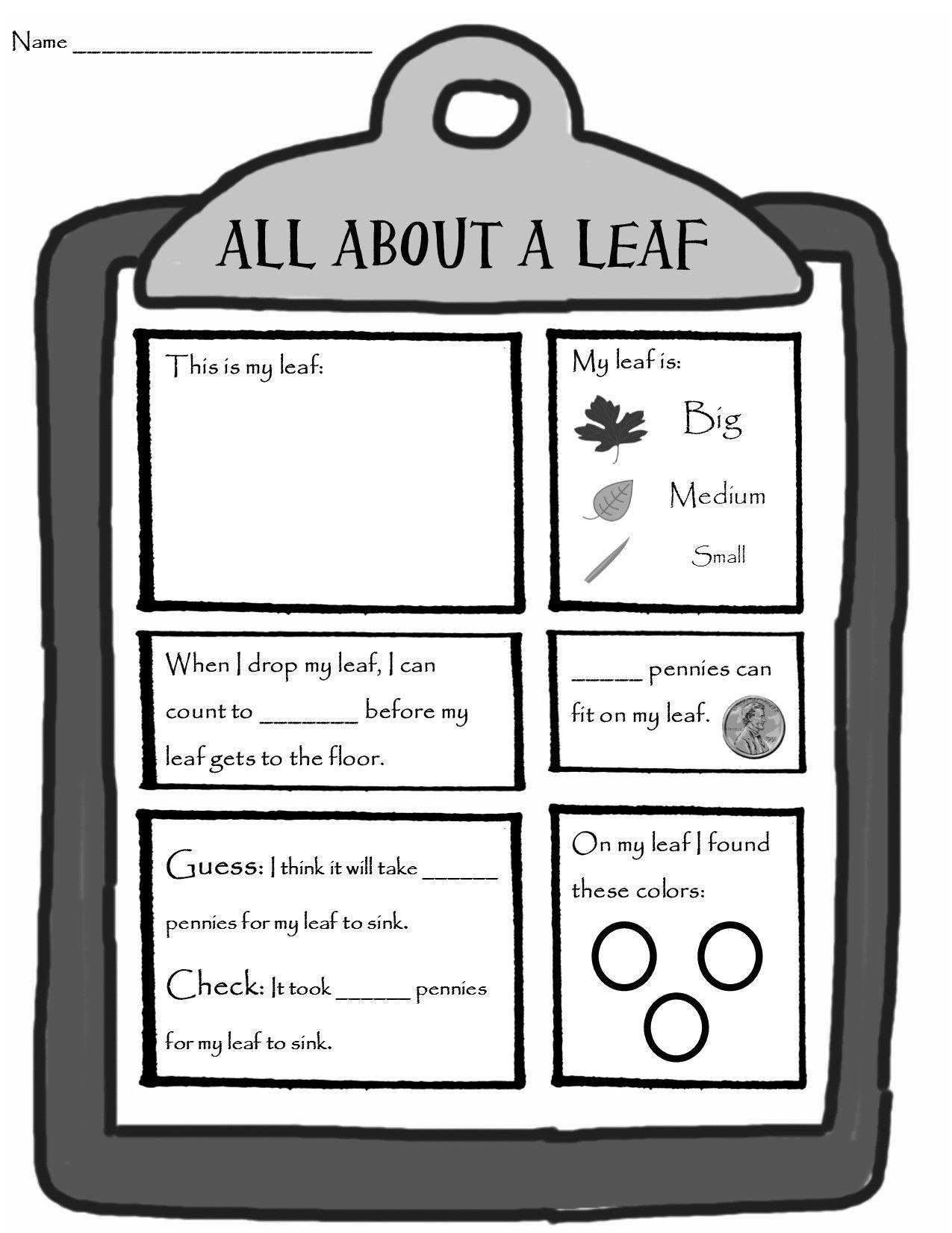 A Leaf Investigation Homeschool Science Experiments Kindergarten Science Center Kindergarten Science [ 1650 x 1275 Pixel ]