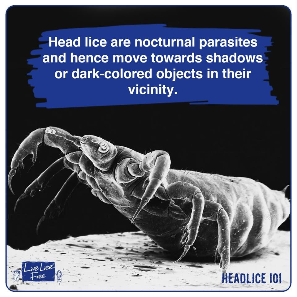 Head Lice Facts에 있는 Live Lice Free님의 핀