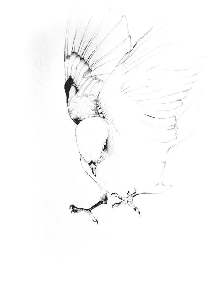 My bird illustration