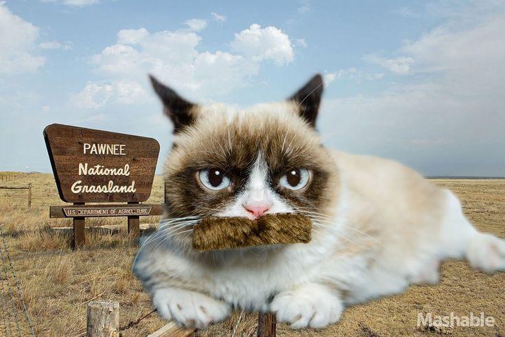 new grumpy cat pics | new grumpy cat pictures | Grumpy Cat Wears ... | Life is good---not ...