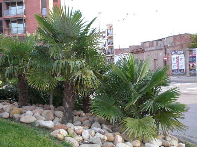 Arte y jardiner a dise o de jardines trachycarpus - Diseno de patios y jardines ...