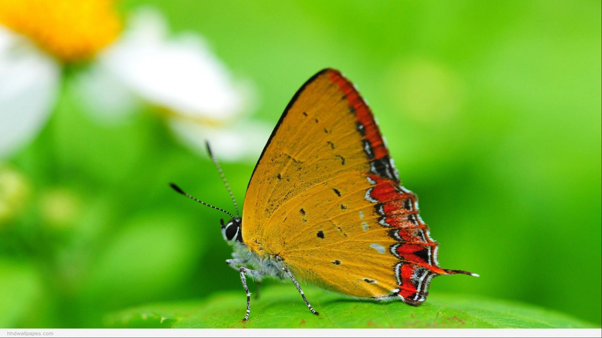 22133best Hd Nature Free Stock Photos Download For Commercial Use In Hd High Resolution Jpg Images Hd Nature Wallpapers Nature Wallpaper Butterfly Wallpaper