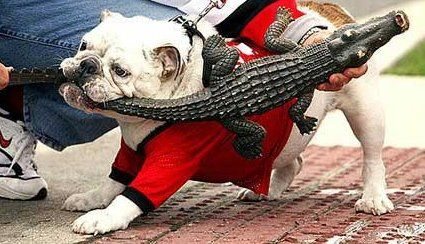 Ga Fla Go Dawgs With Images Georgia Bulldogs Football