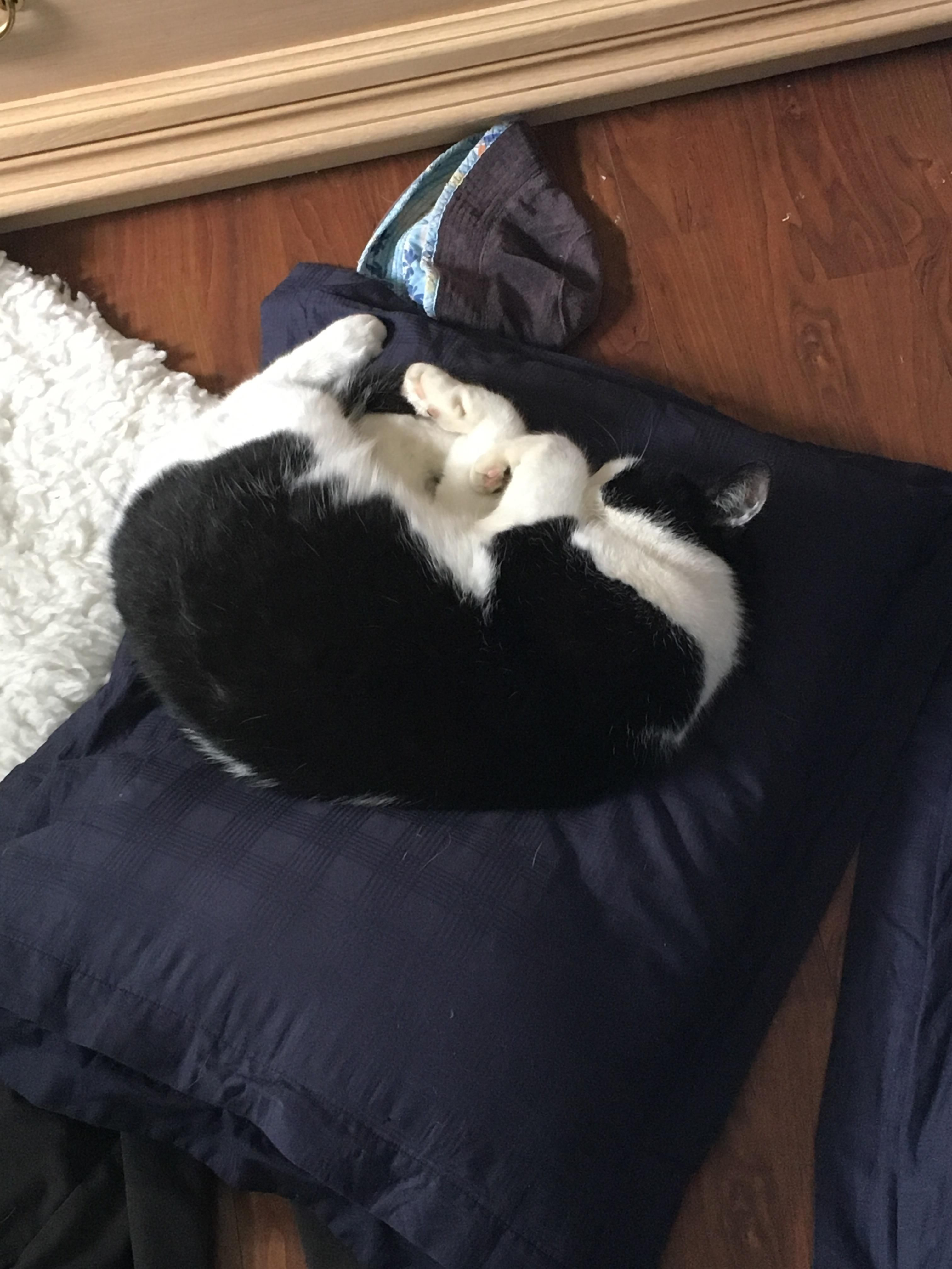 This fat fluff makes a habit of sleeping in the oddest places he possibly can. http://ift.tt/2ssQARe