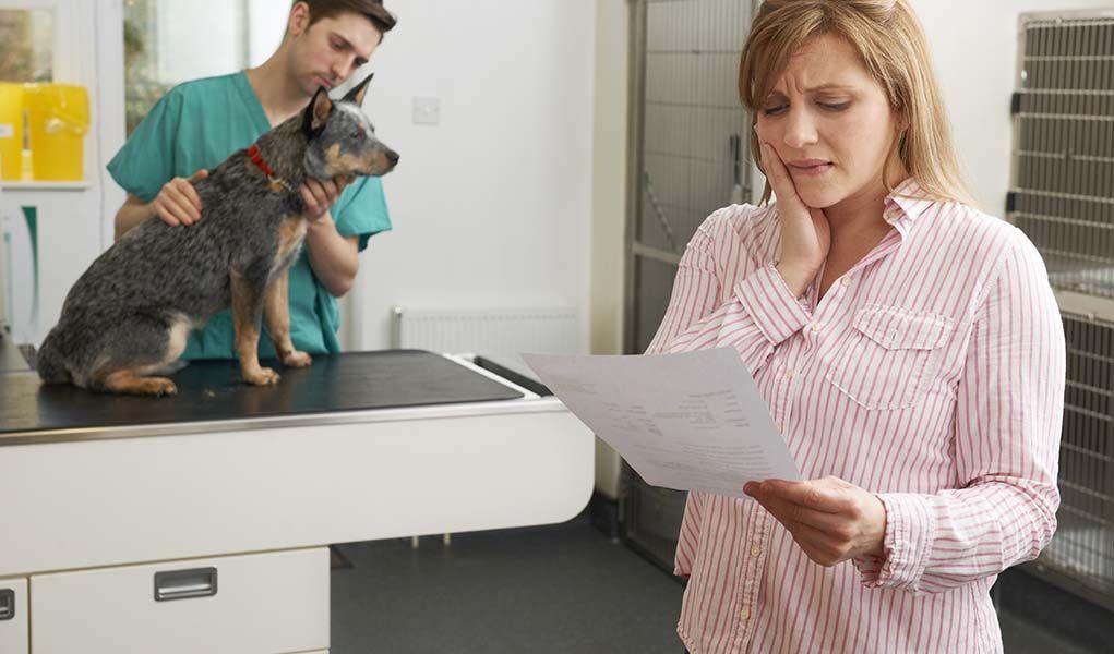 5 emergency vet care financing options pet insurance