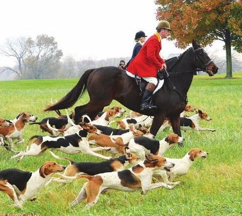 Pin By Cotswold Farm On Fox Hunting Fox Hunting The Fox And The Hound Smooth Fox Terriers
