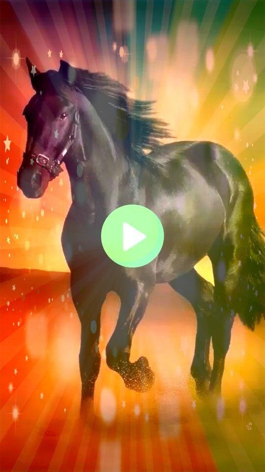 horses Arena y Fuerza Arena y Fuerza  Pferde   meme horses Arena y Fuerza Arena y Fuerza  Pferde  meme horses Arena y Fuerza Arena y Fuerza  Pferde  Photo  Running Horse...
