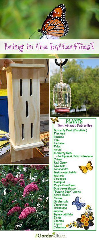 Bring in the Butterflies | Butterfly garden, Hummingbird ...