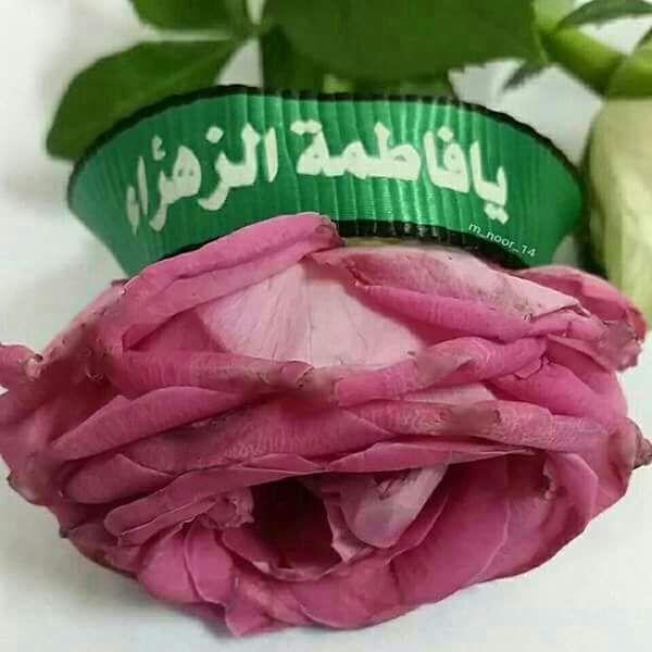 Pin By Tahani Al Sheikh Moh D On السيدة فاطمة الزهراء عليها السلام Watermelon Fruit Cabbage