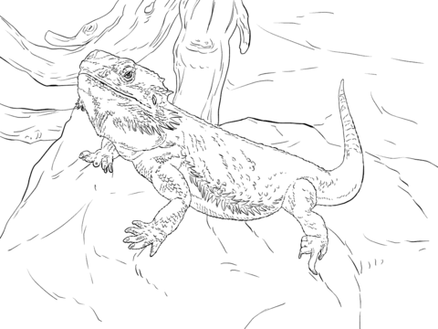 Central Bearded Dragon Coloring Page