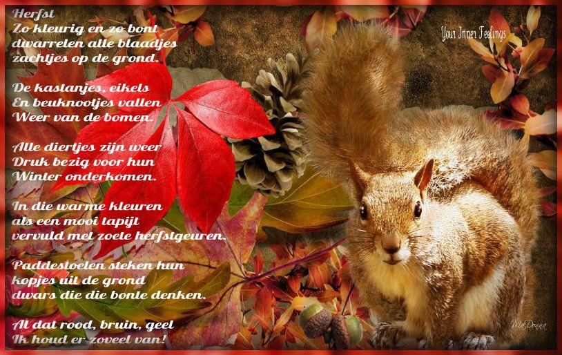 Een Warme Winter : Herfst zo kleurig en zo bont dwarrelen alle blaadjes zachtjes op de