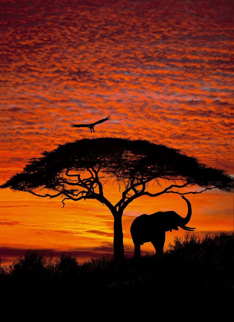 African sunset going to recreate this photo with crayon for African sunset wall mural
