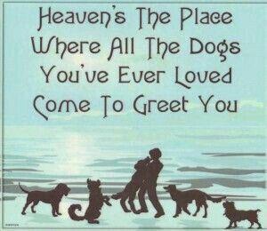 Pomeranian Angel Art Picture Dog Memorial Pet Loss Gift Rainbow Bridge