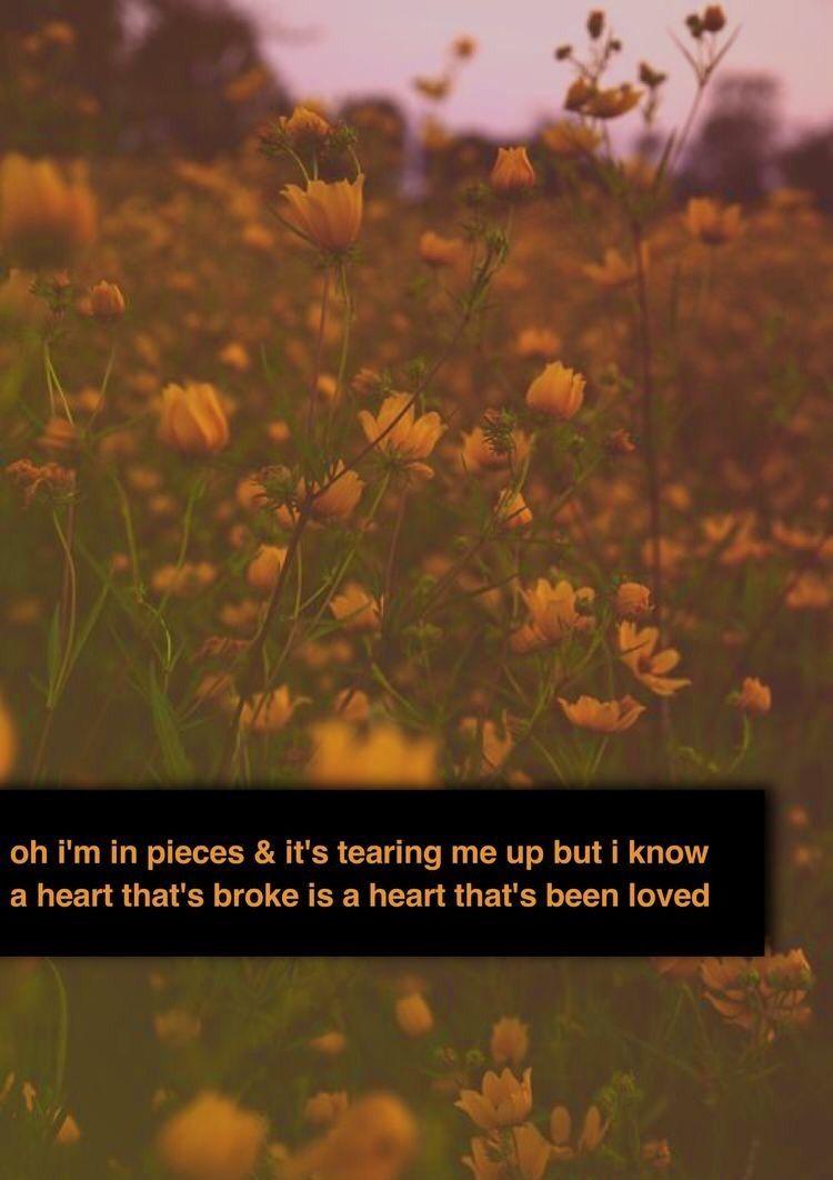 Supermarket Flowersed Sheeran Lyrics Pinterest Song Quotes