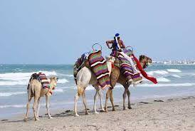 safari tunisie
